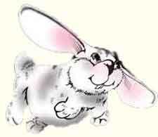 Кролик летит! Замечательный кролик лети!
